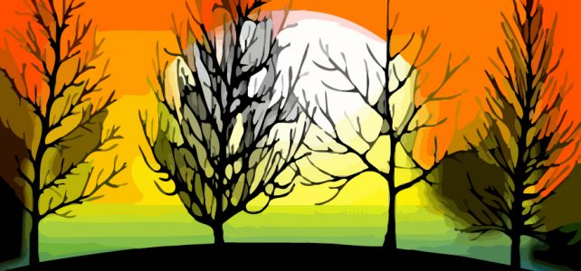Деревья в тени на закате